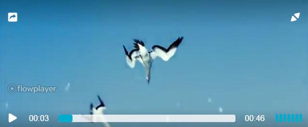 screenshot showing the wordpress video plugin in action